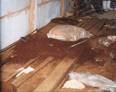 Cuidados com Armazens evitam problemas com Ratos