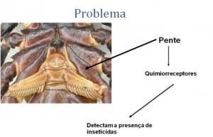 A Prevenção é o método mais eficaz de controle do Escorpião
