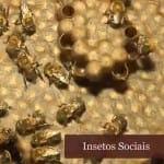 insetos sociais: abelhas e formigas