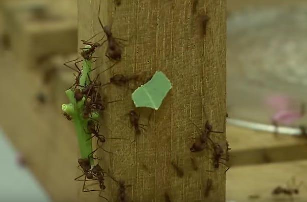 Pesquisa com Formigas o e Controle em Hospitais