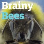 abelhas inteligentes natureza sutentabilidade