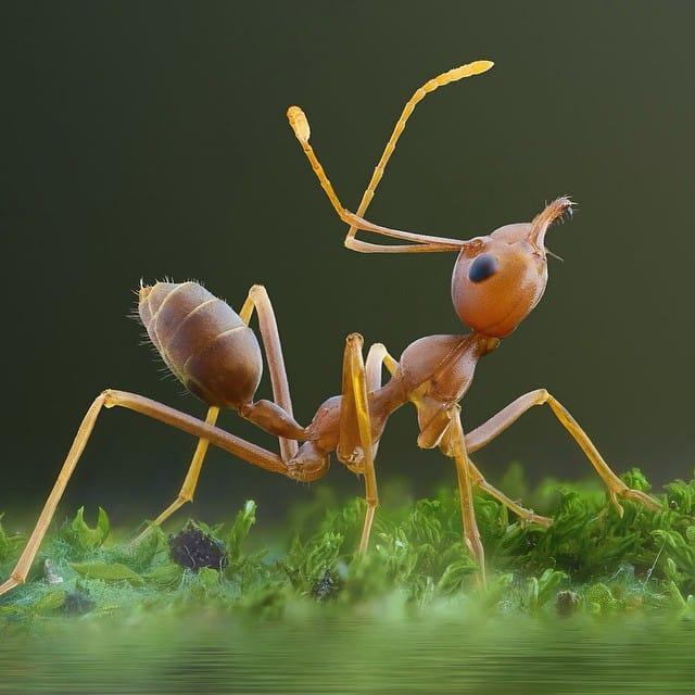 Formigas e o Ecossistema
