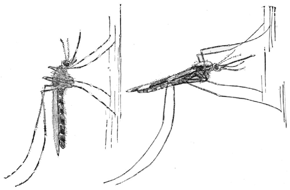 Aplicativo pretende mapear casos dengue, malária e zika