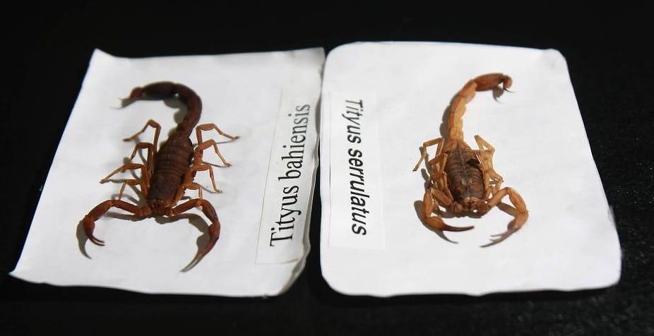 Escorpiões Fazem USP Alertar Alunos da FEA