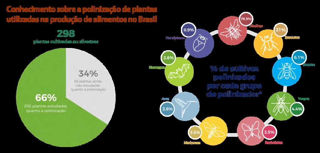 As abelhas predominam, participando da polinização de 91 (80%) das 114 culturas agrícolas que dependem da visita de polinizadores e são responsáveis pela polinização exclusiva de 74 (65%) delas.