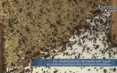 Estudo Para o Controle Biológico de Formigas Saúvas